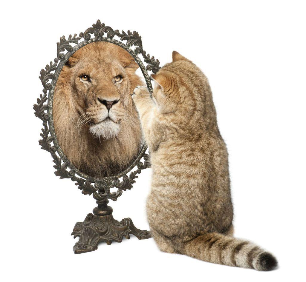 תהליך עיבוד חווית לידה עוזר לנו לשחרר ולקבל את הלידה הקודמת שלנו ולהמשיך הלאה ללידה הבאה Cute Husky Puppies Lion Images Cats
