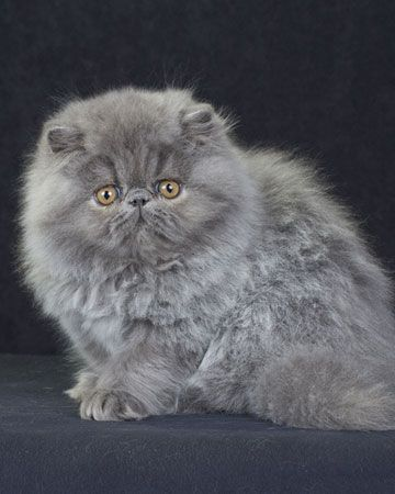 20 Weird Facts About Cats You Probably Didn T Know Cat Having