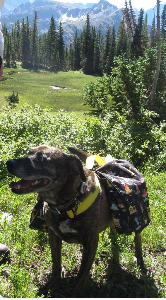 diy doggie backpack