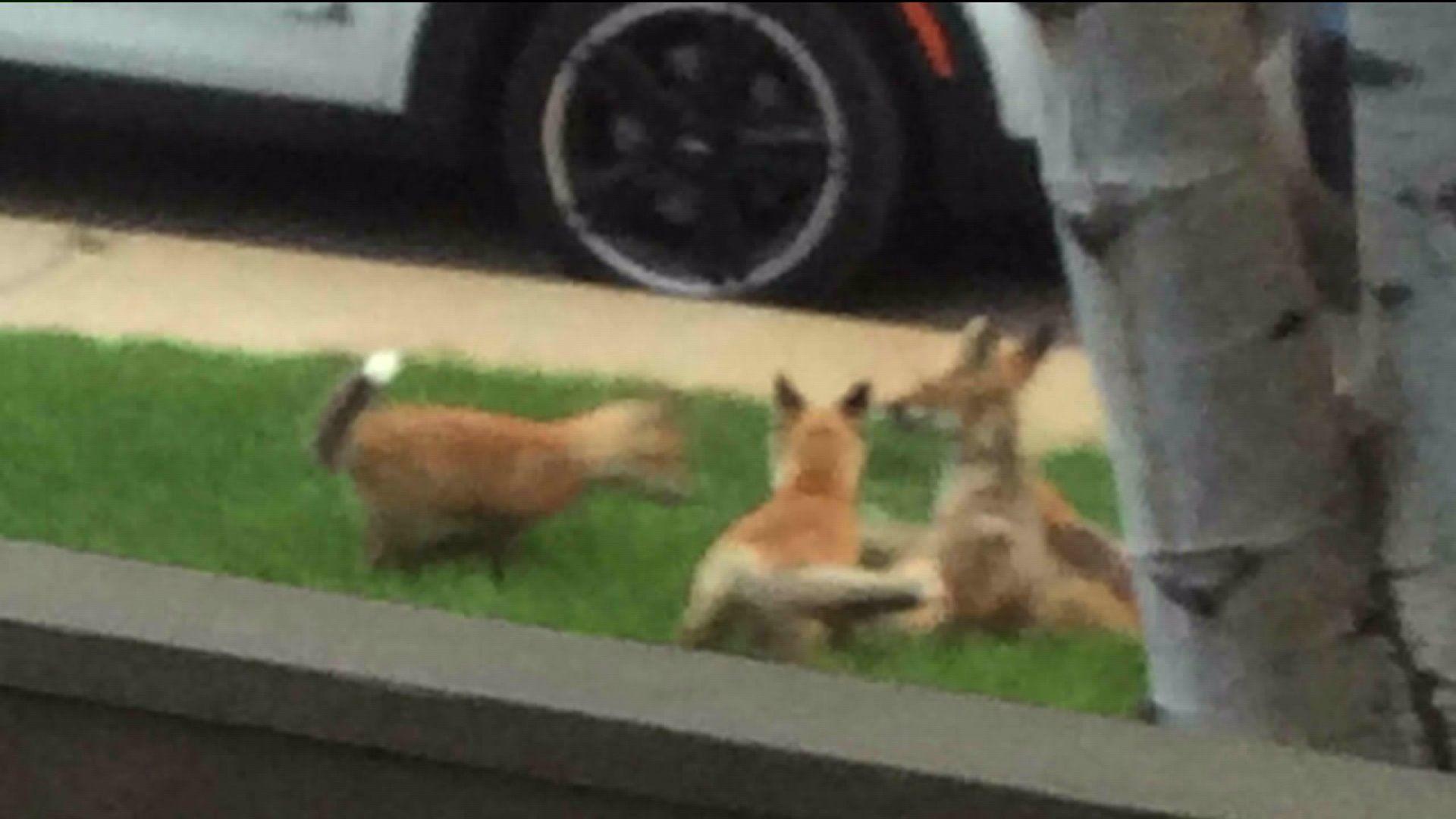 How to safely live with Colorado wildlife FOX31 Denver