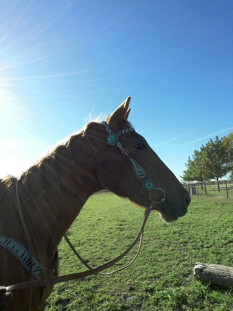 How do you build the top line on your horses?