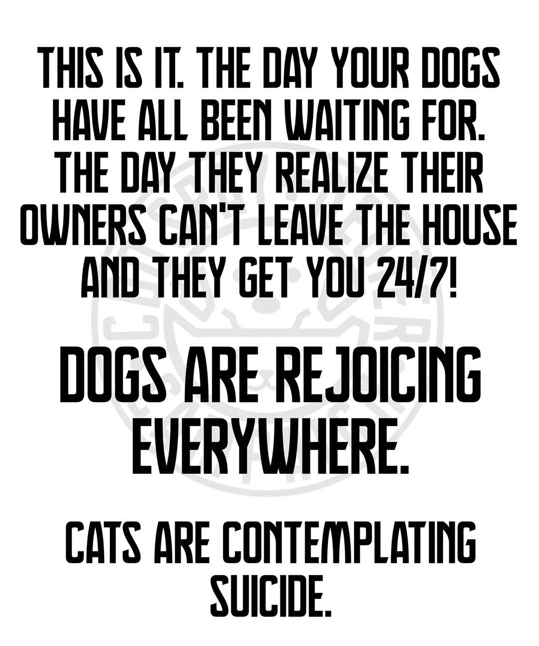 Pin by Elizabeth Larson on Cats, Cats, Cats! in 2020