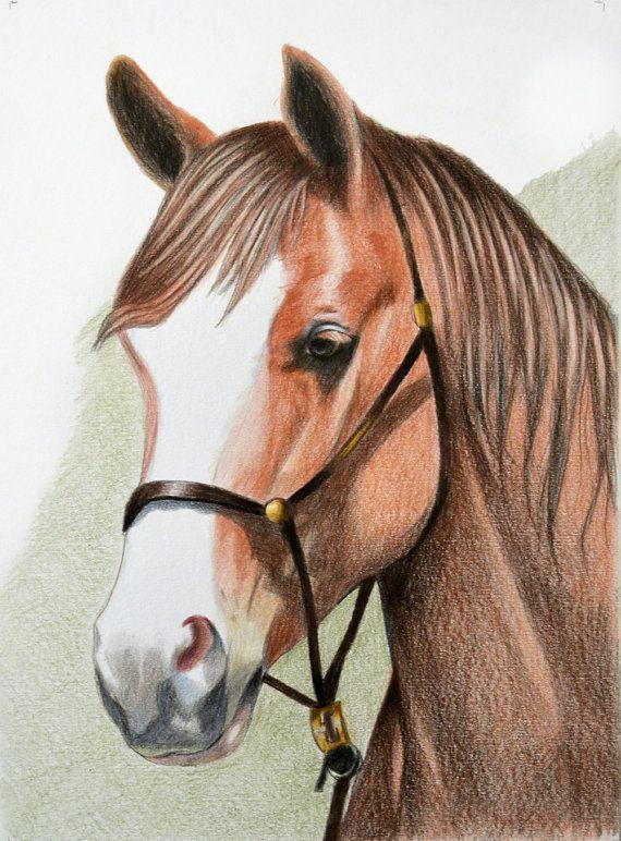 Original Art Horse Colour Pencil A4 Animal Drawing Horse Picture Horse Drawing Horse Illustration Horse Illustration Animal Drawings Horse Drawing