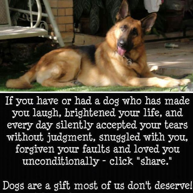 All of my dogs (most of them German Shepherd Dogs) have been gifts I do not deserve.