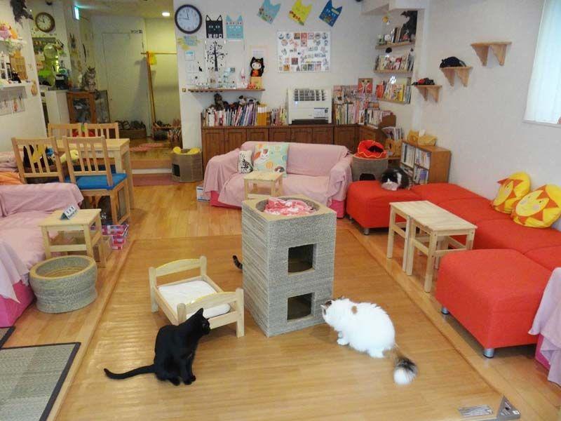 Cat Cafe Nekorobi Tokyo, Japan Cafe japan, Unique