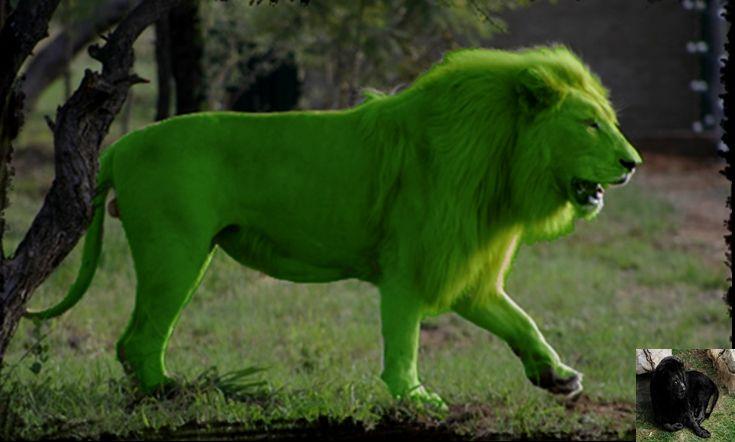 Gallery For Melanistic Lion Melanistic Lion Beast Boy Melanistic