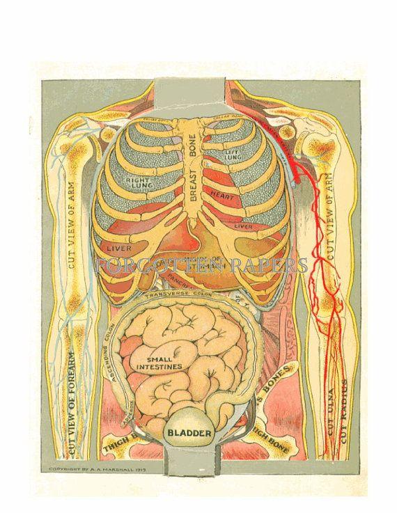 full female anatomy
