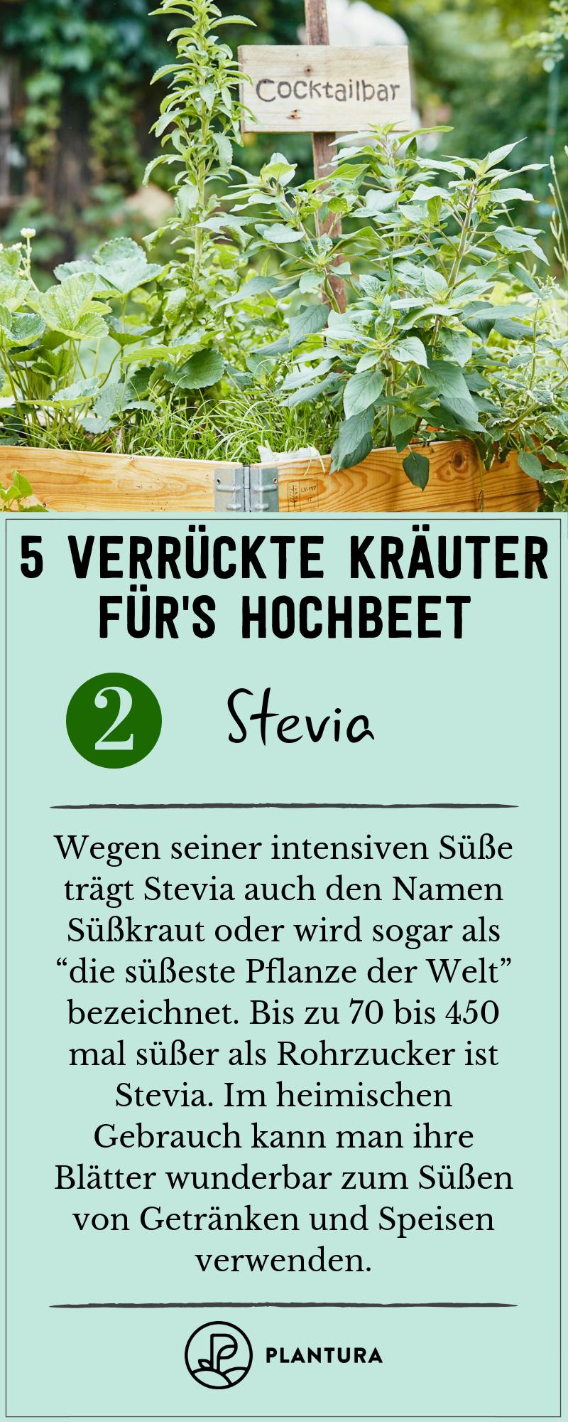 Verruckte Krauter Fur Das Hochbeet Die Top 5 Hochbeet Stevia Pflanze Und Krauter Anpflanzen