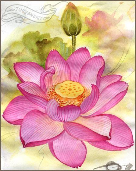 , Lotus Watercolor Painting – Oleg Turyanskiy, My Tattoo Blog 2020, My Tattoo Blog 2020