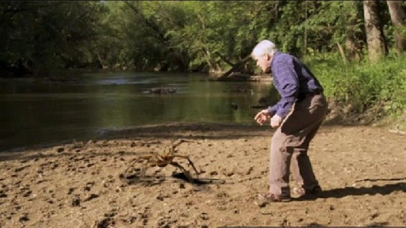 Largest Camel Spider On Record Biggest real spider in the