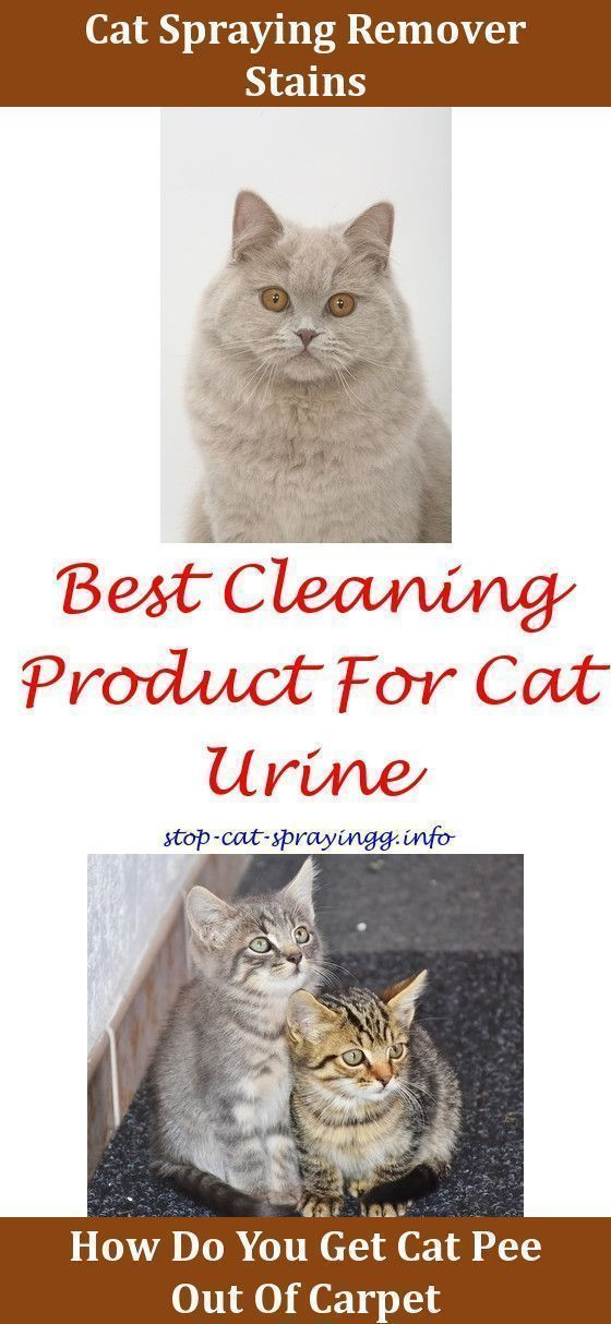 Cat Urine Cleanses Cat Toilet Training Cleaning Cat Pee