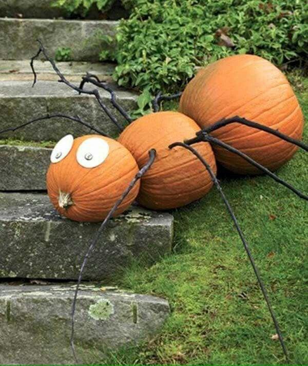 Spider pumpkins Halloween decoration Ideas Pinterest Spider - halloween pumpkin painting ideas
