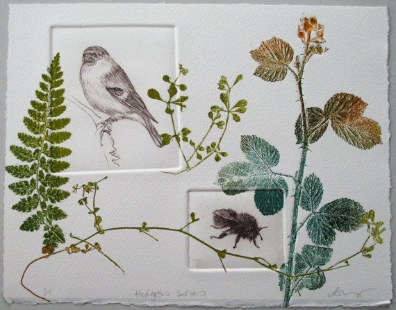 LynnBaileyPrintmaker ETSY Bulfinch and bee. Hedgerow series. Drypoint with monoprint plants Combining drypoint prints of a Bulfinch and a Carder Bee with mono print plants, this fine art print is from my hedgerow series. A delightful combination of British wildlife and botanical print.