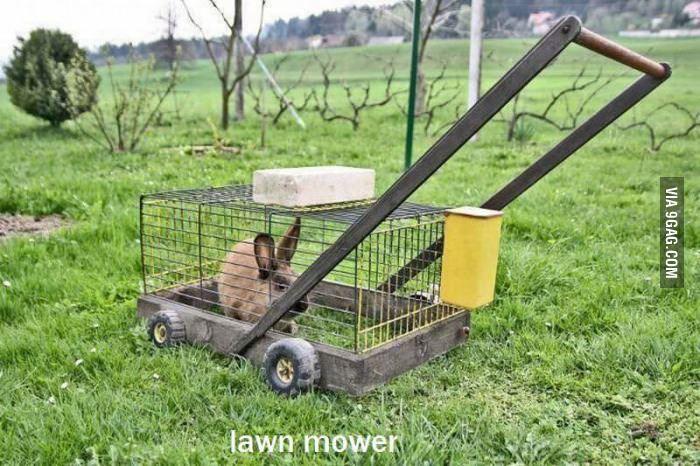 Best lawn mower ever