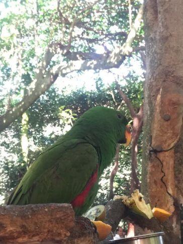 Bird eating at Wildlife Habitat Port Douglas