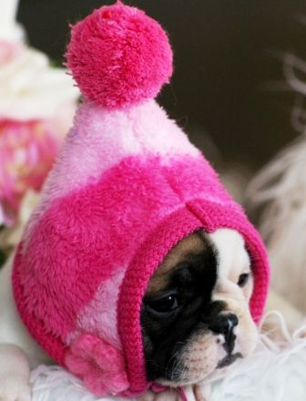 teacup puppies store .com #cuteteacuppuppies