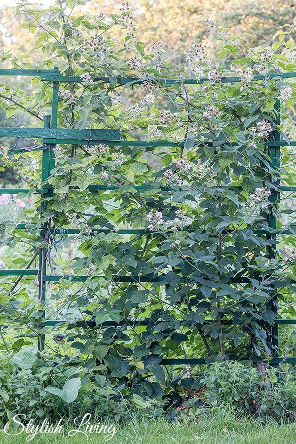 Prächtig Besuch bei Lieblingsoma und schon wieder ein Umzug | Garten &FP_11