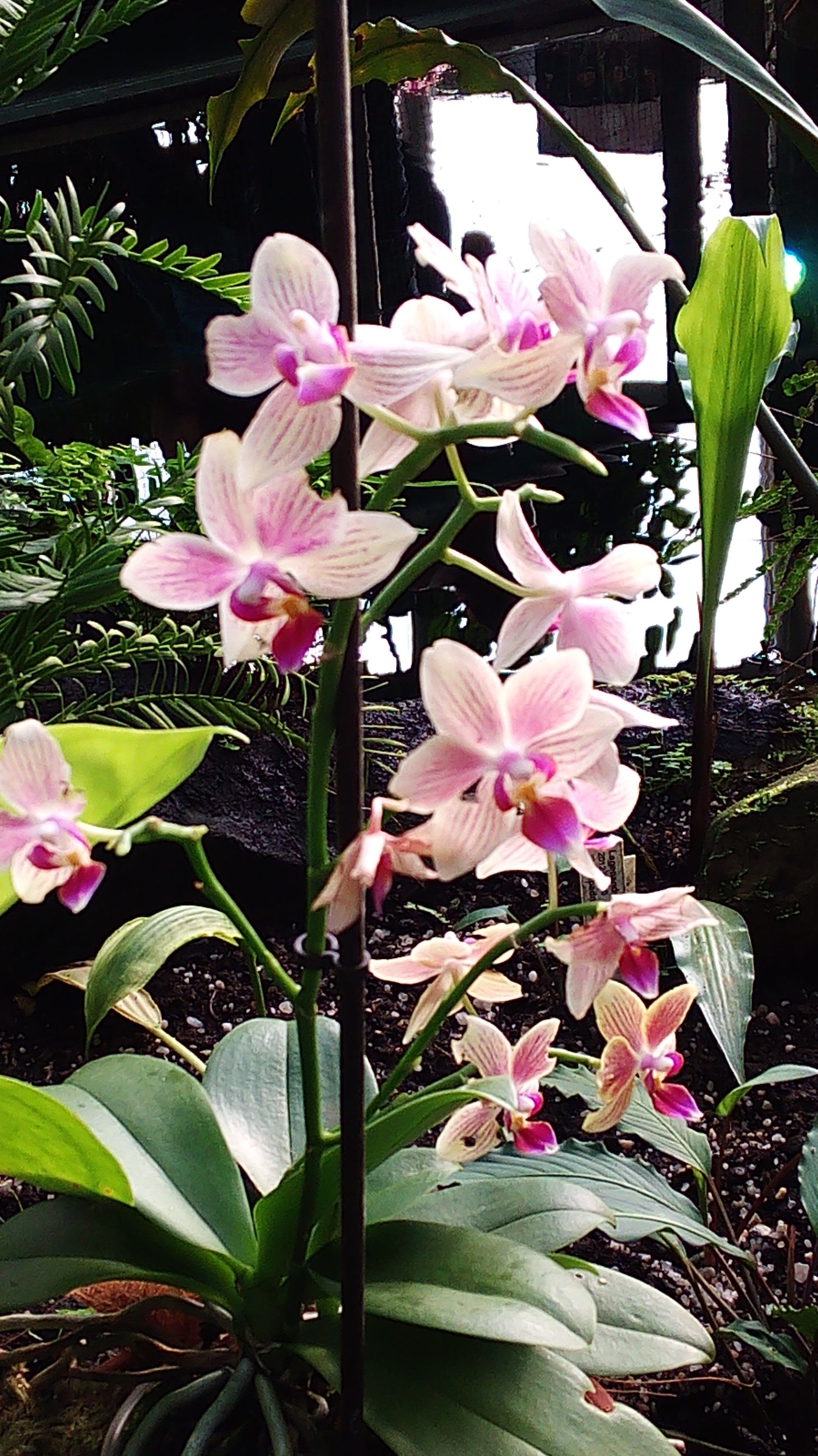 orchid exhibition 03/2015
