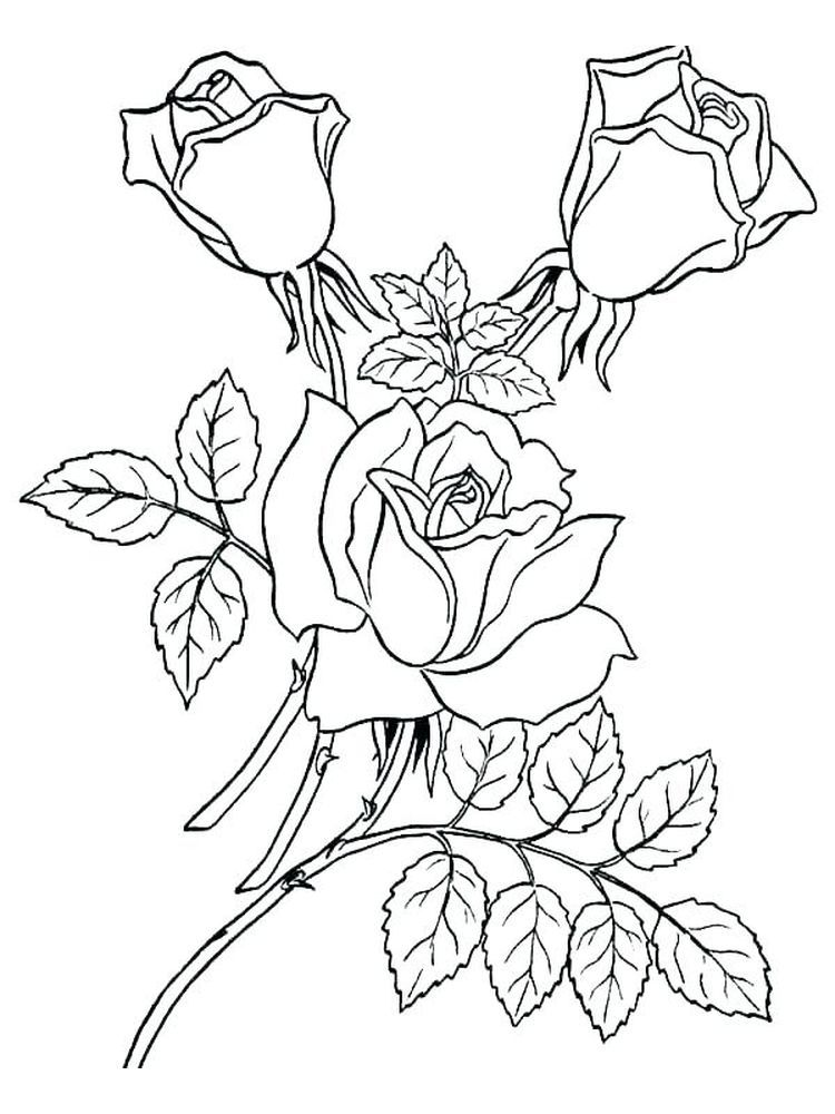 A Rose Coloring Page Rose Coloring Pages Garden Coloring Pages Flower Coloring Pages