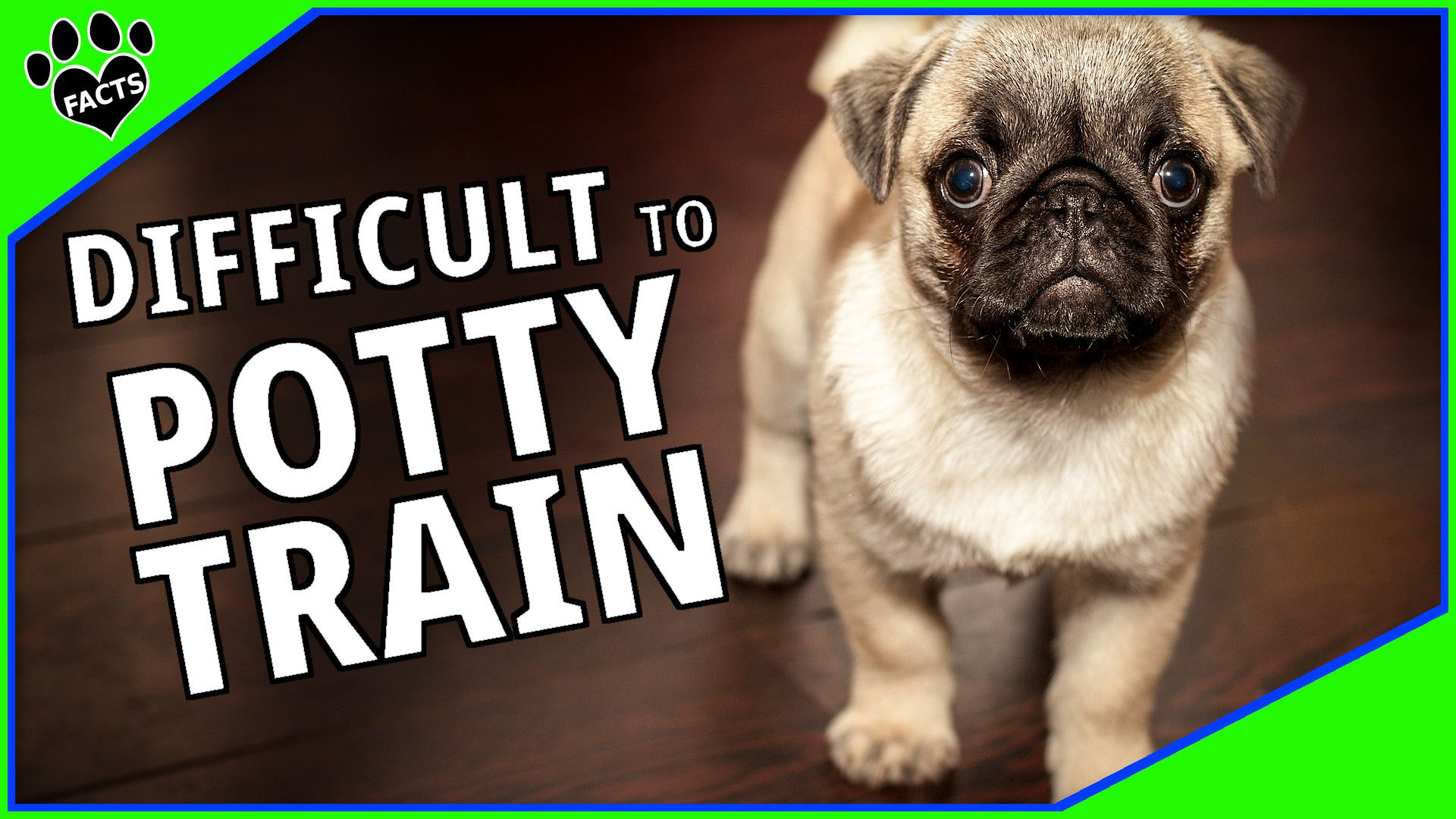 Difficult To Potty Train Dog Breeds And Housebreaking Tips Pug