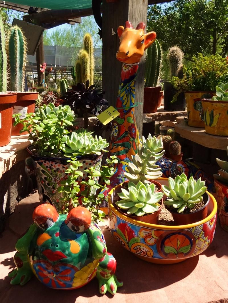 desert gardens nursery talavera pottery succulents. Black Bedroom Furniture Sets. Home Design Ideas