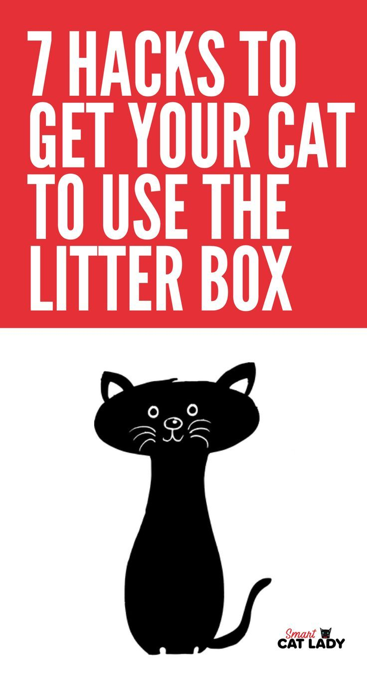 7 Hacks to Get Your Cat to Use the Litter Box Cat peeing