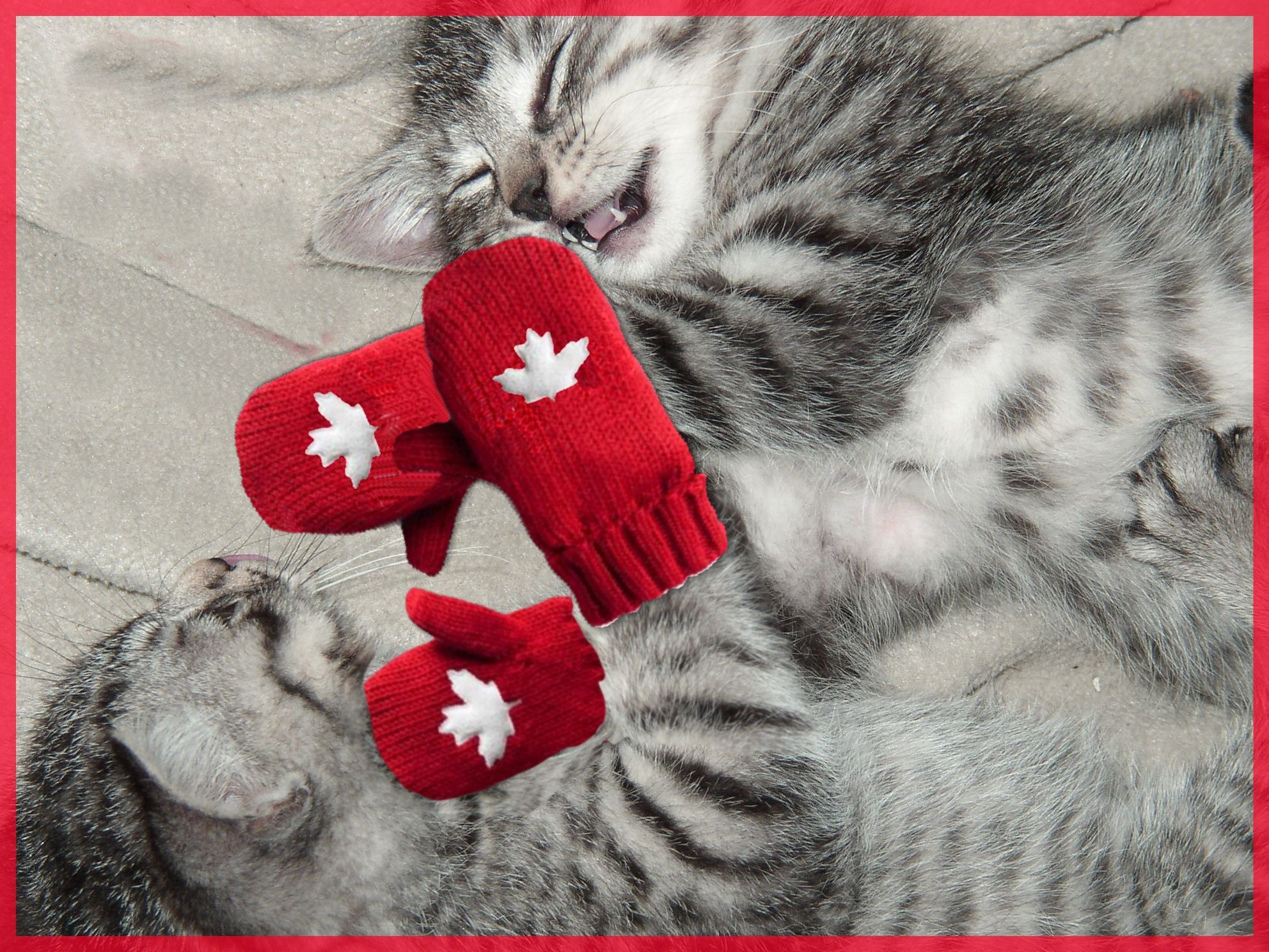Kittens Wearing Mittens Eh Happy Cat Funny Cats Kittens Cutest