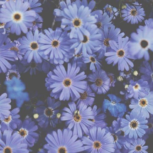 Blue Flowers Tumblr Flower Wallpaper Flower Header