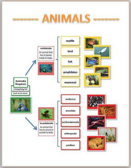 Image of: Flow Chart Great Chart Showing How The Kingdom Animalia Is Split Upunfortunately It Doesnt Print Well Pinterest Great Chart Showing How The Kingdom Animalia Is Split Up