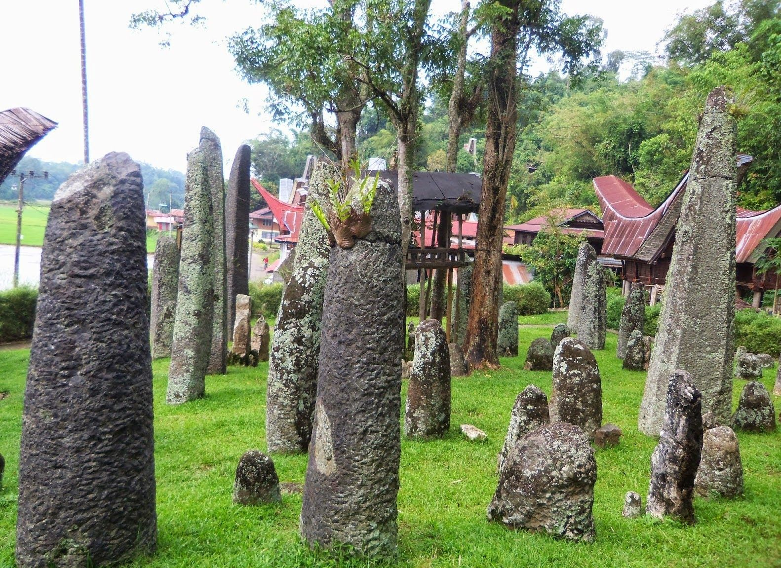 In this area you can find about 56 stone menhirs in a loop with 4 trees in the middle. Most stone menhir has a height of about 2-3 meters. From this place you can see the beauty of Rantepao and surrounding valleys. Located in an area with ketinggian Season 1300 Meters above sea level.