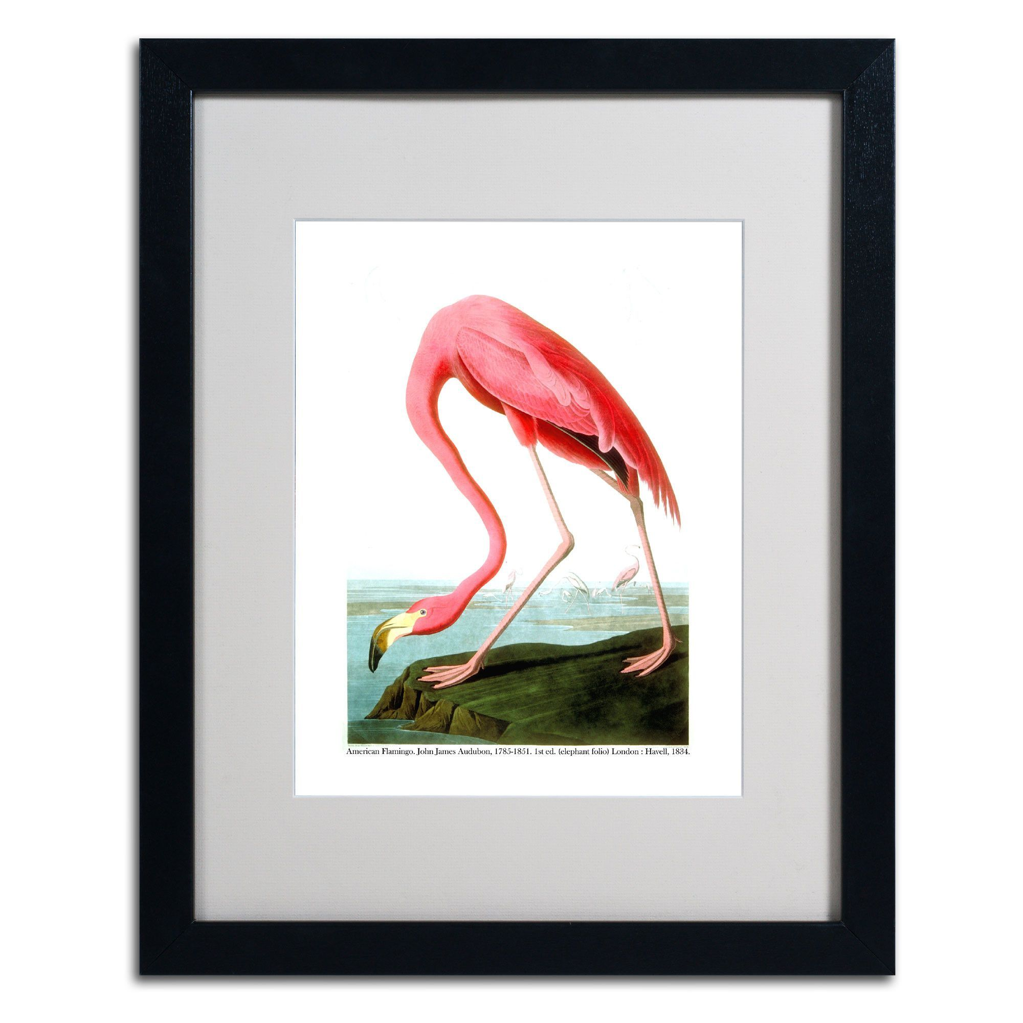 American Flamingo by John James Audubon Matted Framed Painting Print