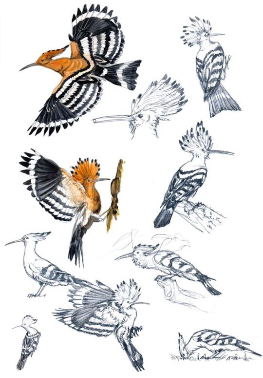 Under Leaves Bird Drawings Bird Sketch Bird Art