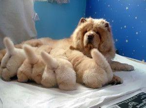 Estos 16 perros con sus pequeños retoños son realmente hermosos! 11)