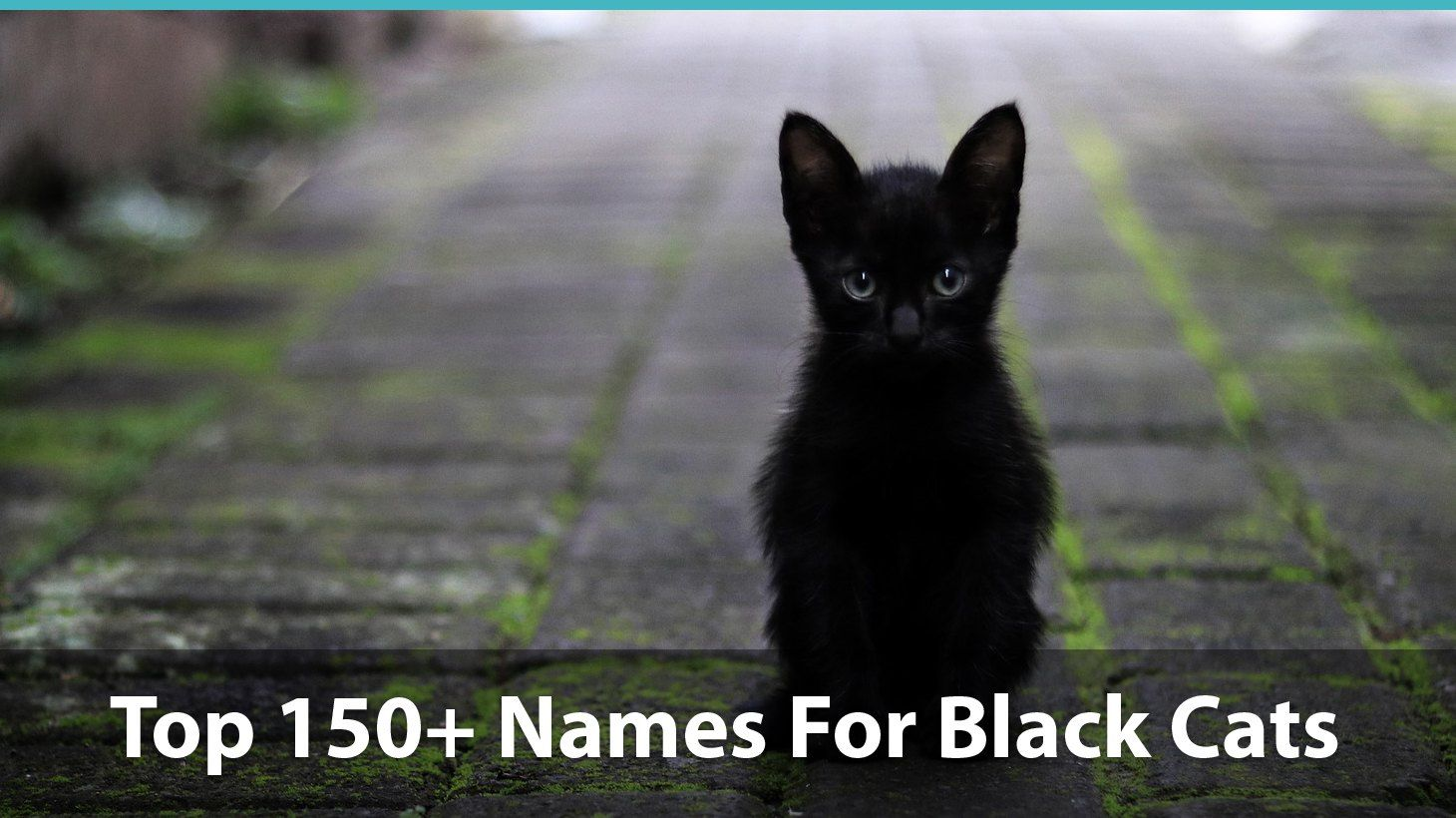 Top 150+ Names For Black Cats Funny, Unique, PopCulture