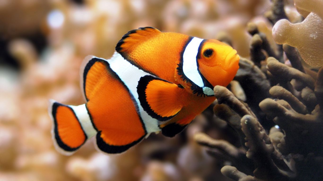 Pin Von Onelife Drugfree Auf Fish Mit Bildern Farbenfroher Fisch