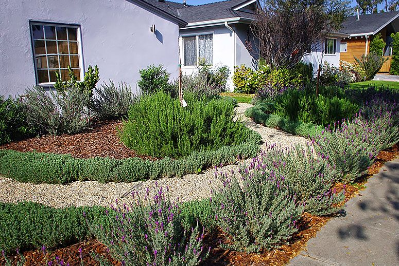 Wood Chips As Ground Cover With Drought Tolerant Plants 400 x 300