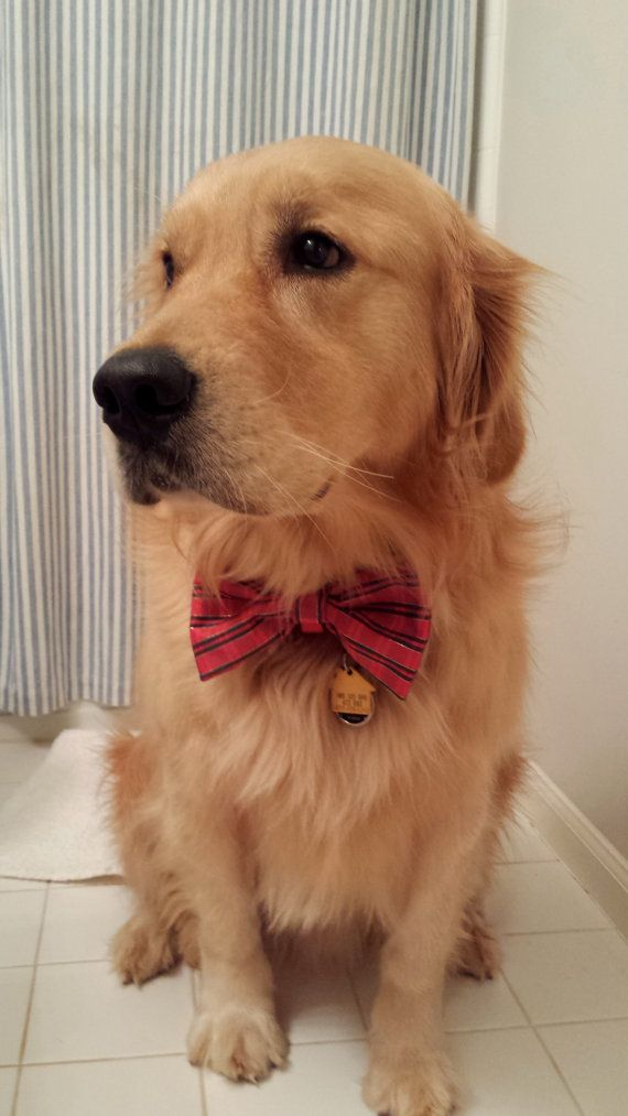 Doggie Bow Tie Puppies Kitties Cute Dogs Puppies Cute Dogs