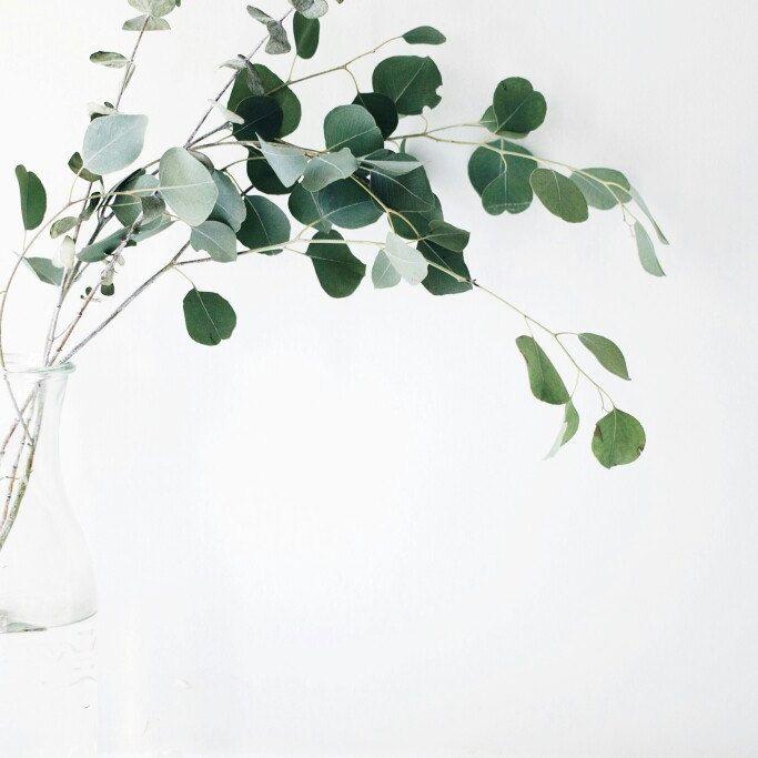 Minimalismus, Umweltfreundliche