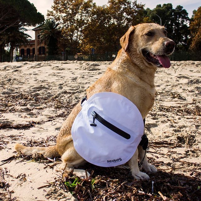 #dog #seabag #seabagoriginalunderwater  #sea #bag #watertight #watersports #dogs  #animals