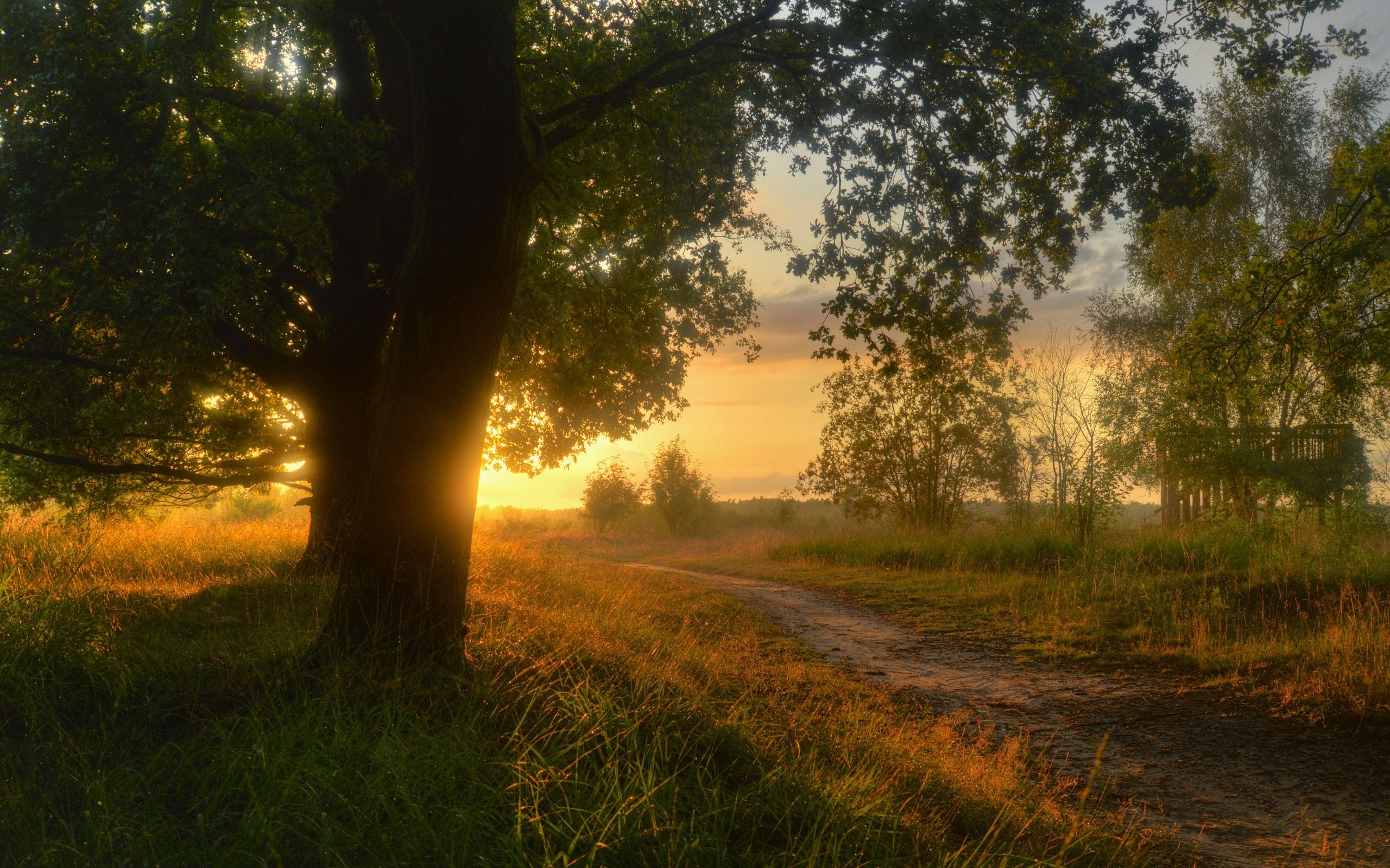 Olive Tree In A Green Field During Sunrise At Germany