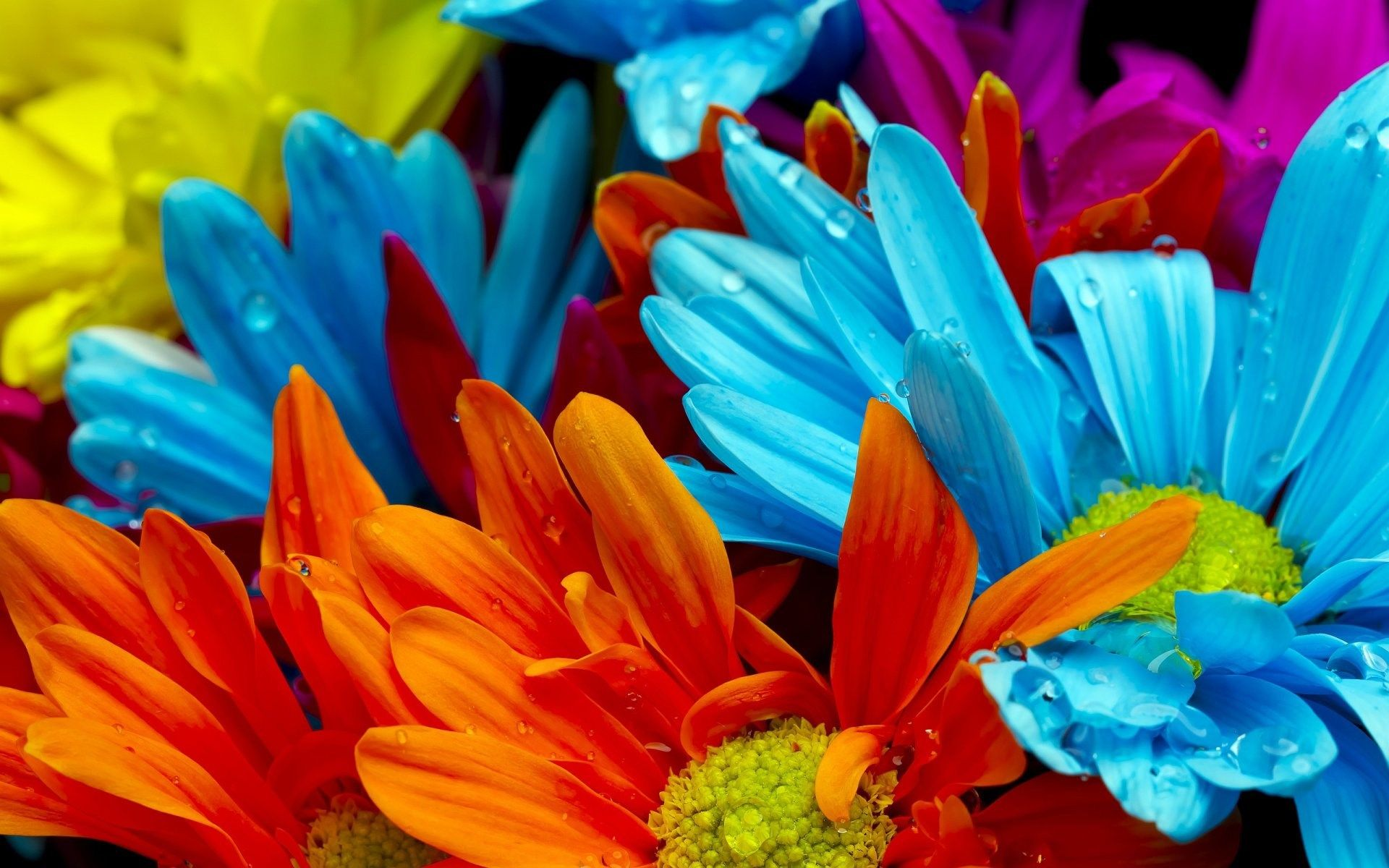 Best download hd wallpaper for desktop colorful flowers