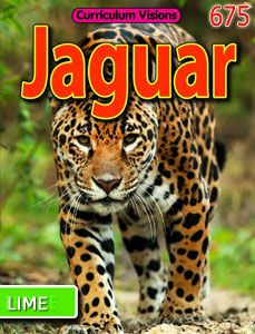 Learn All About Jaguars In The Rainforest In This Curriculum Visions  Digital Book.