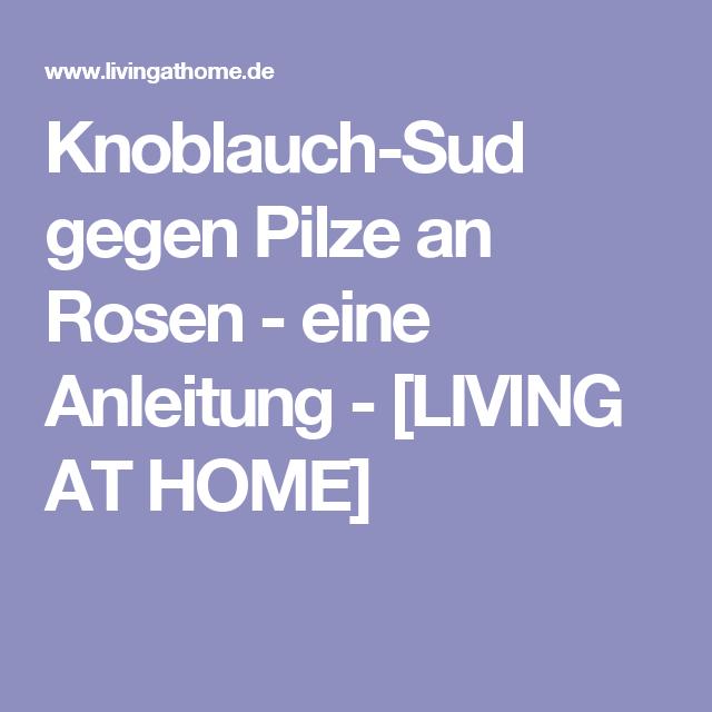 knoblauch sud gegen pilze an rosen garten pinterest garten rosen und naturnaher garten. Black Bedroom Furniture Sets. Home Design Ideas