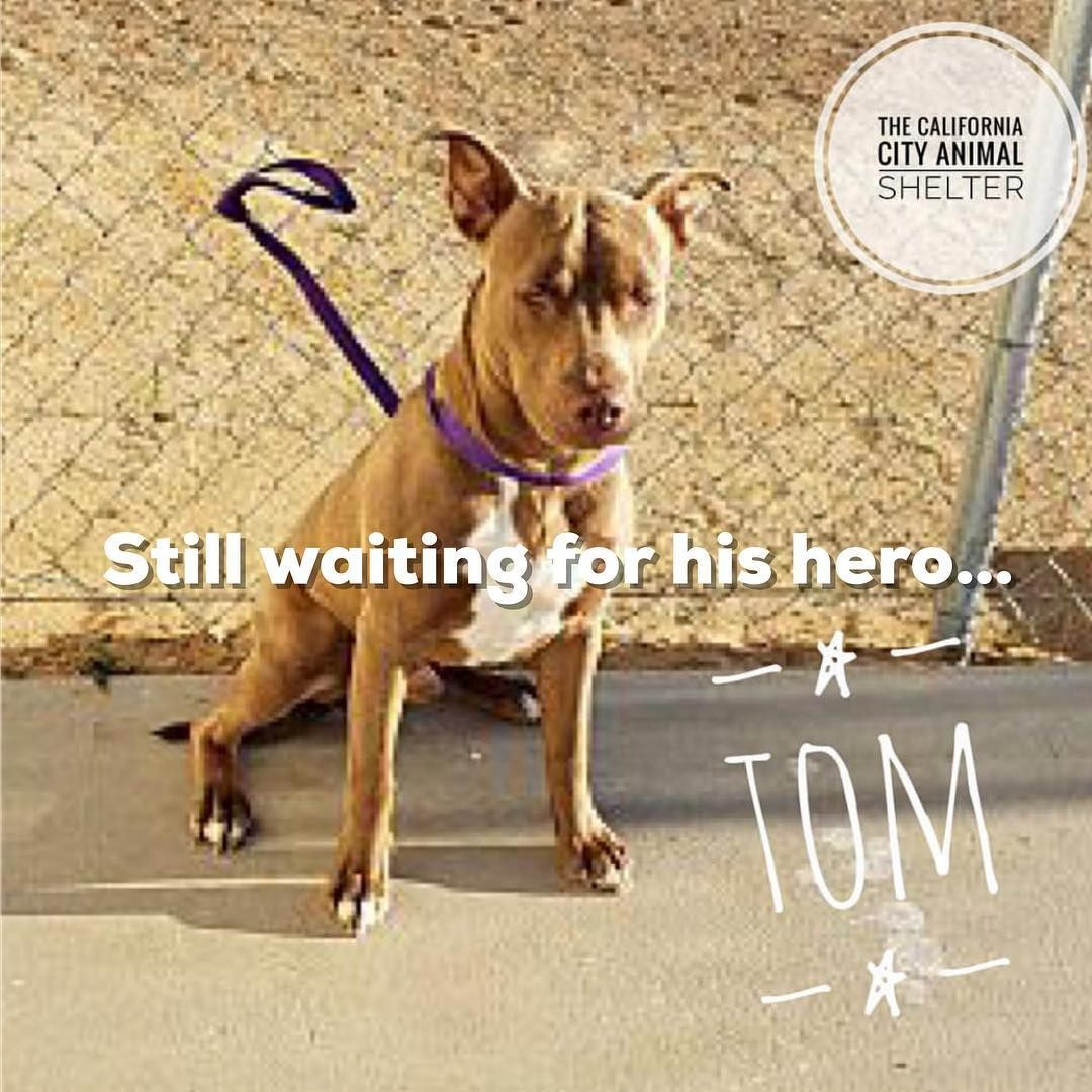 California City Animal Shelter On Instagram Still Waiting Shelter Is Full Tom Needs A Plan To Stay Safe Tom Was Found With Images Animal Shelter Animals Pet Adoption
