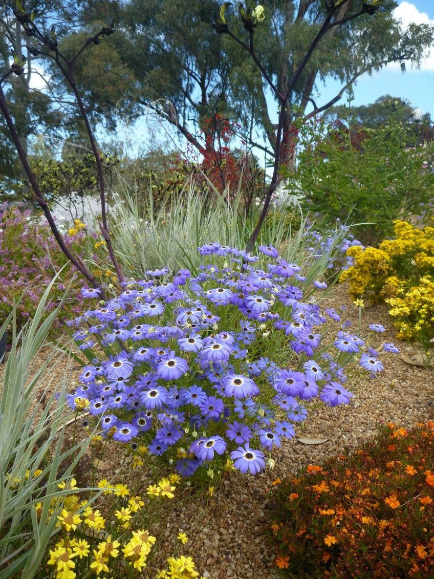A beautiful display at Kings Park in Perth highlighted by ...