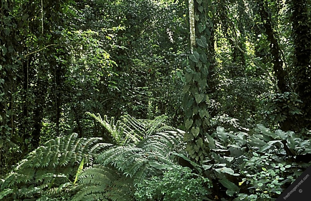 horizontal indonesia sumatra tropical rainforest trees