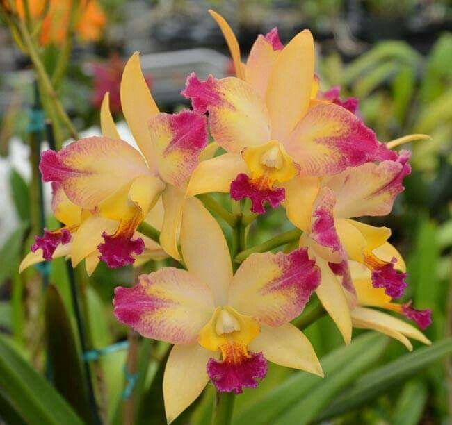 Beautiful Orchids!