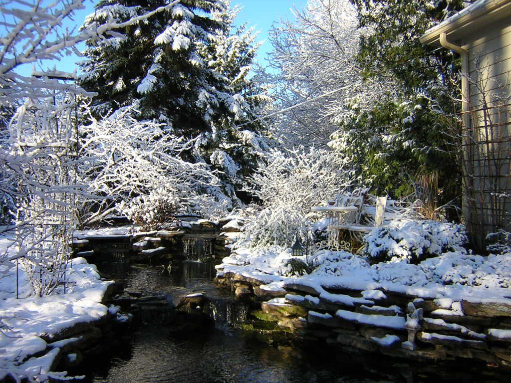 Winter Shot Of A Koi Pond Koi Pond Pond Koi