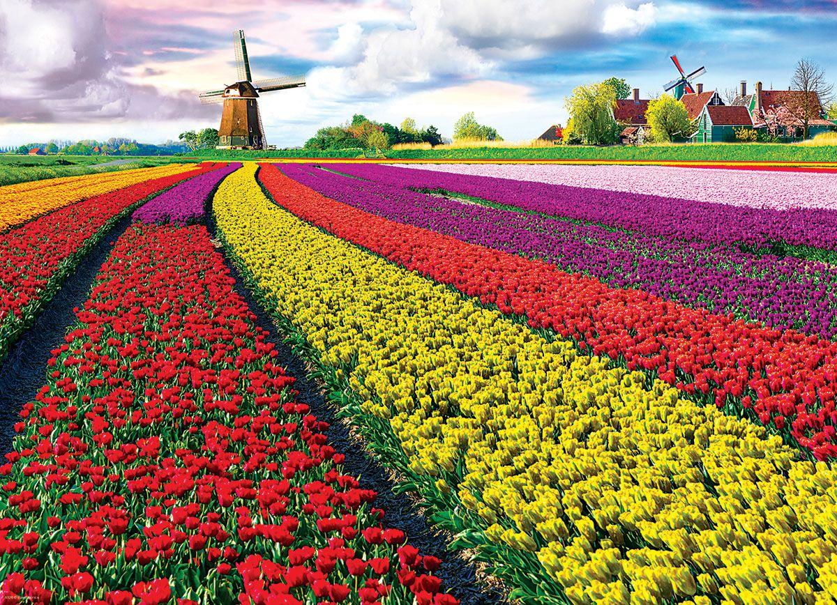 Tulip Field Netherlands 1000 Pieces Eurographics Puzzle Warehouse Tulip Fields Tulip Fields Netherlands Landscape Trees