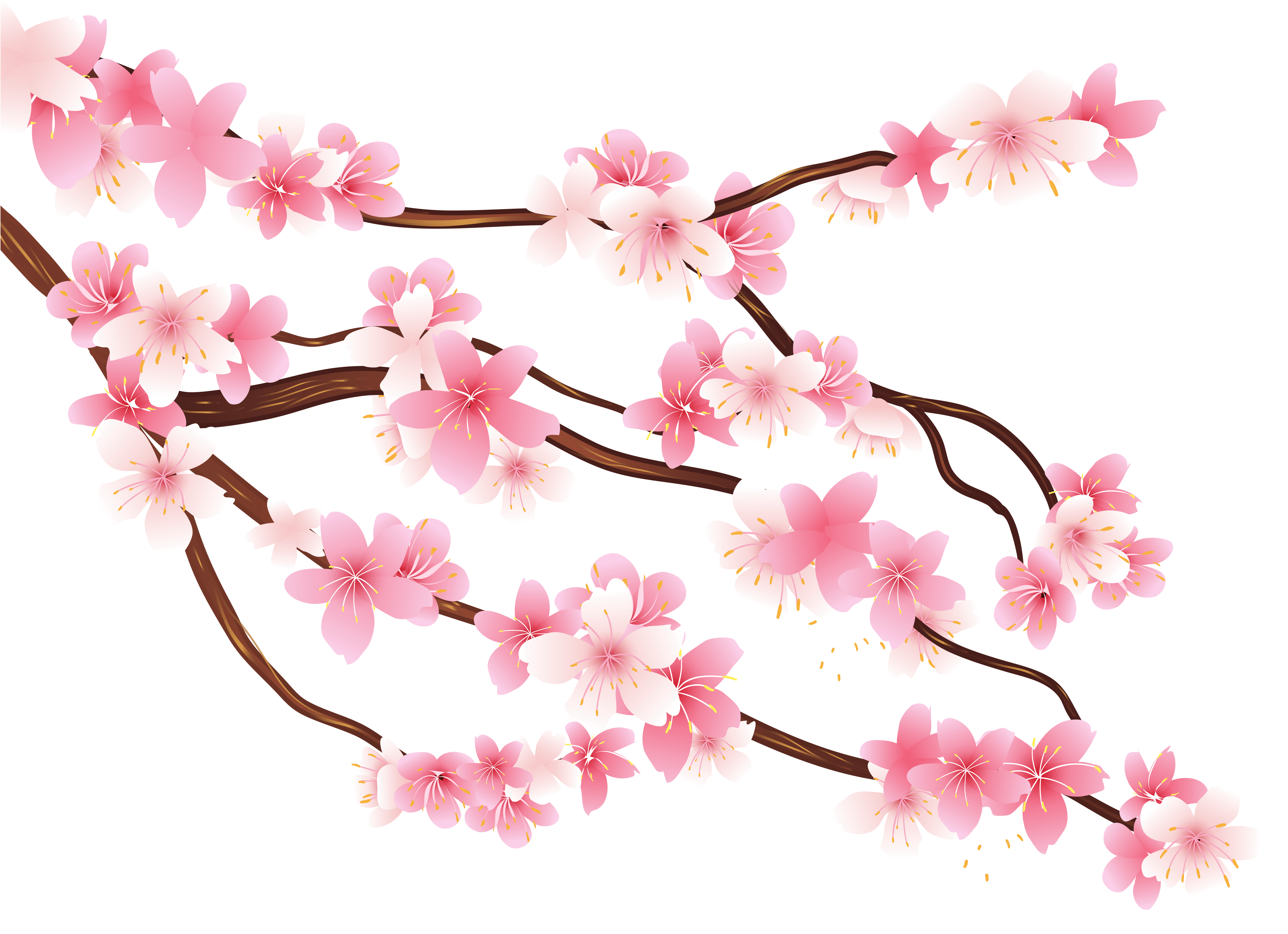 Pink Spring Branch PNG Clipart Image   aaa   Pinterest ...